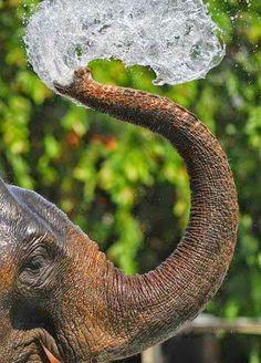 Elephant loving his splash