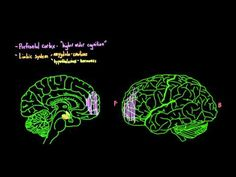 Brain changes during adolescence - YouTube