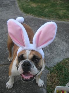 Happy Easter ! Help Save the Bulldog http://www.causes.com/actions/1742598-save-the-english-bulldog-breed?ctm=home