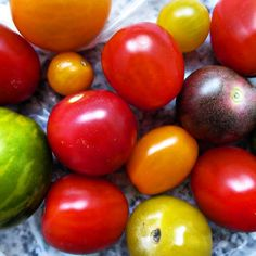 Wild tomatoes! Green, red, orange, yellow, big and small ones.