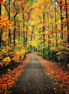 Fall colours (Maryville, Tennessee) by Tony Wayman on 500px cr.af.
