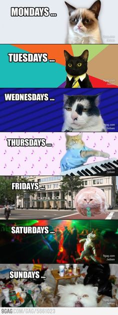 Grumpy cat is 24/7 For me!!!The  Thursday cat is from the Pistachio commercial... I know how to play the song that he plays! ( Heart and Soul )