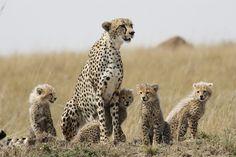 Kenia Cheetah, Camel, Africa, Teddy Bear, Animals, Kenya, Animales, Animaux, Camels