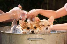 6-maneras-de-prevenir-y-deshacerseen perros