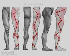 @Ha_Ryo_ 다리근육 쉽게 그리는법. 가끔 기억 안나면 저 선따라그리면 되더라...