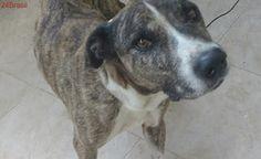 Cachorro resgatado em São Paulo precisa de adotante