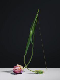 Elegant Flowers Sculpted Into Unexpected Minimalist Arrangements - My Modern Met
