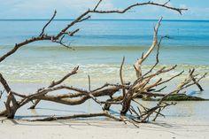 Sunken trees