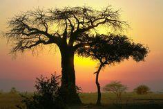 Dans le Parc national de Tarangire au nord de la Tanzanie © Brigitte Boucard-Verstichel