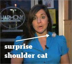 Cat jumps on Michigan reporter's shoulder on live TV (video link)