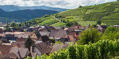 Le vignoble alsacien © C. Meyer