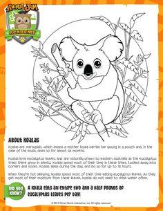 Animal Jam Academy Art Amp Nature Integration Owl Comic