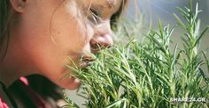Sniffing Rosemary Can Increase Memory By - Collective Spark Rosemary Herb, Increase Memory, Cocina Natural, Medicinal Herbs, Natural Remedies, Herbalism, Memories, Plants, Northumbria University