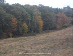 A hint of early #fall colors at Blue Hills Reservation in Milton, #Massachusetts.