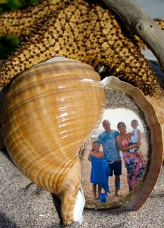 Real Shell Picture Frame Your Picture inside a by pictureinashell, $68.00
