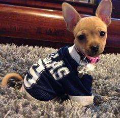 What a cute Dallas Cowboys fan!