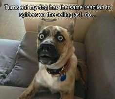 Calcium For Dogs: Why Is It Important And How Can They Get More? - Funny Dog Quotes - Funny Animal Pictures Of The Day 23 Pics The post Calcium For Dogs: Why Is It Important And How Can They Get More? appeared first on Gag Dad. Funny Animal Jokes, Funny Dog Memes, Cute Funny Animals, Funny Animal Pictures, Animal Memes, Funny Cute, The Funny, Funny Dogs, Dog Humor
