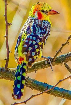 Oiseau You are in the right place about Birds Photography british Here we offer you the most beautif Kinds Of Birds, All Birds, Cute Birds, Pretty Birds, Little Birds, Angry Birds, Exotic Birds, Colorful Birds, Colorful Animals
