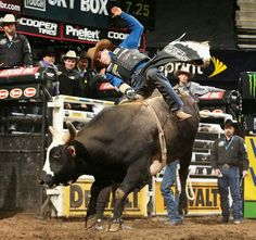 Nice!!!! Bucking Bulls, Bull Riders, Cowboy Up, Country Life, Rodeo, 8 Seconds, Farm Life, Athletes, Animals