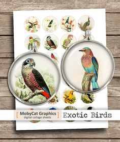 Exotic Birds Digital Collage Sheet 1 25mm 30mm by MobyCatGraphics