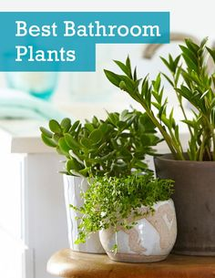 See the 6 best houseplants that can thrive in your bathroom as well as basic care tips.