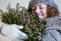 Die Winterheide versprüht Freude im Winter.  #pflanzenfreude #winter #pflanzen #plants