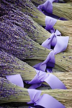 Lavender by elysa222, via Flickr