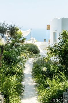 Lush garden pathway by an island home on Capri, Italy.