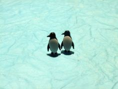 Cute stud penguin earrings