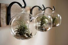 Of course I like this - Home decor / succulents / airplants! Glass Globe Wall Decor mounted to recycled wood board with wrought iron hooks for unique home decor by PineknobsAndCrickets USD) htt. Rustic Wall Decor, Rustic Walls, Rustic Farmhouse Decor, Farmhouse Style Decorating, Modern Farmhouse, Rustic Sunroom, Small Wall Decor, Modern Rustic, Hanging Air Plants
