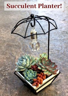 I just love this whimsical succulent planter! The ceramic pot is beautiful quality with a drainage hole. The wire frame umbrella is sturdy, and the hanging light works with a battery! :) What a fun gift for the succulent-lover in your life - especially you! :) #affiliatelink #succulentplanter #succulentpot #succulentplanterideas Flower Planters, Flower Pots, Planter Pots, Planter Ideas, Flowers, Succulent Pots, Succulents Diy, Light Works, Wire Frame