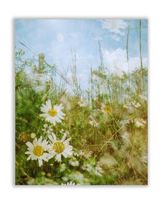 daybreak daisies: ready to hang photo 24x30 by FieldsOfAphelion (Art & Collectibles, Photography, Color, surreal photography, ready to hang photo, large wall art, vintage style, nature photography, botanical photo, summer flower photo, dreamy photography, pastel blue decor, dreamy daisy photo, golden nursery decor, 11x14 16x20 24x30, 24x30 canvas wrap)