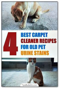 Dog Urine Smell Out Of Carpet In 2020 Pet Carpet Cleaners Pet Urine Carpet Cleaner Homemade