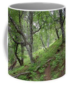 Path trought green forest, coffe mug. Wester Ross, Forest Path, Mugs For Sale, Travel Photographer, Basic Colors, Color Show, Countryside, Fine Art America, Paths