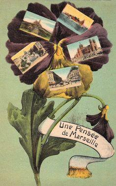 frenchpansy002.jpg (431×692)