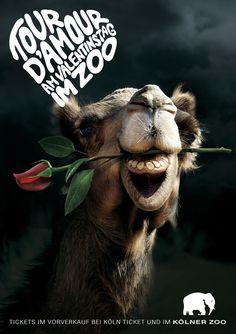 """Zoo köln """"Tour d'amour""""  gefunden auf www.webneel.com gepinned von der Werbeagentur www.BlickeDeeler.de aus Hamburg"""