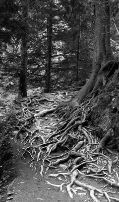 Black and white photography, tree roots, don't know artist :/