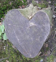 Tree stump in the shape of a heart. Just how neat is that! I love it!!