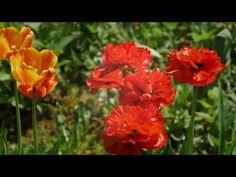 27 cамых ранних весенних цветов в саду - YouTube