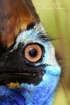 The Australian Cassowary Beautiful Eyes, Beautiful Birds, Australian Birds, Praying Mantis, Human Eye, Prehistoric Creatures, Wildlife Nature, Bright Eyes, The Real World