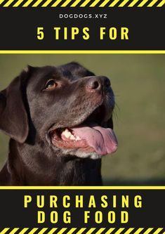 With the proper nutrition, a dog will be happier, their coat will be glossier, and their fur will be softer. Proper Nutrition, Glossier, Kombucha, Swan, Dog Food Recipes, Dream Cars, Iron Man, Labrador Retriever, Surfing