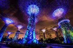 Singapore Supertrees - Garden by the Bay