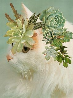 collages featuring kitties and plant cutouts. << So Charlemagne.