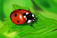 Ladybug - Amanda's Imaginarium