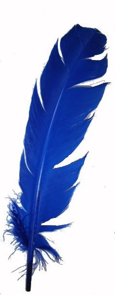 One Blue Feather Im Blue, Kind Of Blue, Deep Blue, Blue And White, Azul Indigo, Bleu Indigo, Feather Art, Blue Feather, Azul Anil