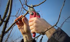 Tree trimming and tree pruning services in Denver, CO - http://treeremovaldenverco.net/tree-trimming-denver-co