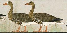 Un particolare del fregio egizio delle Oche di Meidum. IV dinastia, 2575-2465 a. C., Il Cairo, Museo Egiziano.