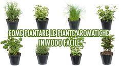 Come piantare le piante aromatiche in modo facile