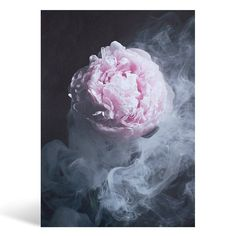 pre-order // Enchanted  Contemporary Wall Art