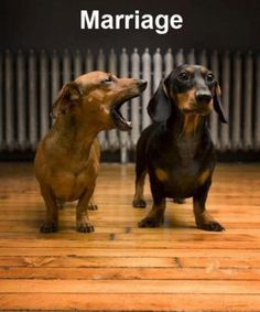 Marriage Dogs